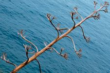 Free Dry Tree Against Sea Royalty Free Stock Image - 19663186
