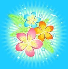 Free Frangipani Flower Stock Image - 19663381