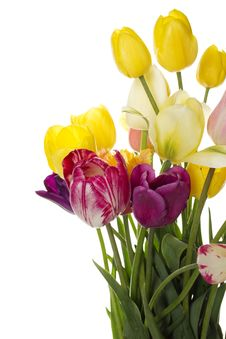 Free Tulips Stock Images - 19663964
