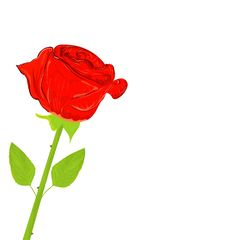 Free Beautiful Red Rose Royalty Free Stock Photo - 19664585