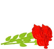 Free Realistic Red Rose Stock Image - 19664591