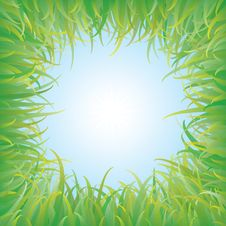 Free Green Grass Stock Image - 19665001