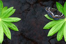Free Two Green Leaf On Water Royalty Free Stock Photo - 19665015