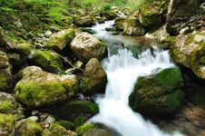 Free Forest Waterfall Stock Photos - 19667013