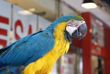 Free Parrot Stock Photos - 19667033