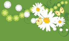 Free Floral Banner With Chamomiles And Butterflies Royalty Free Stock Images - 19667369