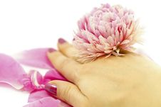 Free Hand With Flower Royalty Free Stock Image - 19667726