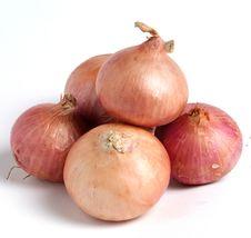 Free Onion Royalty Free Stock Photos - 19667918