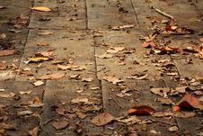 Free Old Wooden Path Background Stock Photos - 19667953