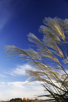 Free Grasses Against The Sky Stock Images - 19668814