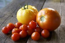 Free Fresh Organic Tomatos Stock Image - 19669761