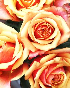 Free Red Orange Rose Bunch Stock Image - 19669941