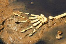 Free Prehistoric Predator Claws Stock Image - 19670611