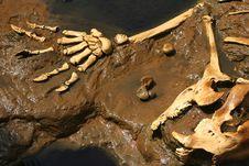 Free Prehistoric Bones Stock Photo - 19670630