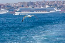 Free Seagull In Istanbul Stock Image - 19670711