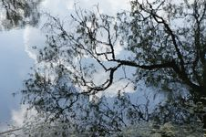 Free Branches Royalty Free Stock Photo - 19670865
