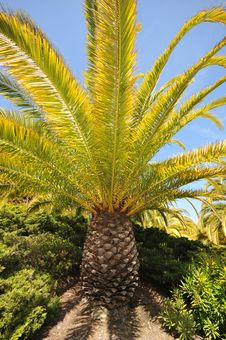 Free Palm Tree Base And Branches With Sky Stock Photography - 19671402