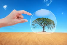 Free Hand Protect  Tree Stock Image - 19672491