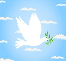 Free Pigeon2 Stock Image - 19672751