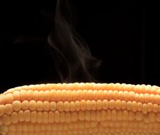 Free Steamy Corn Royalty Free Stock Images - 19672769