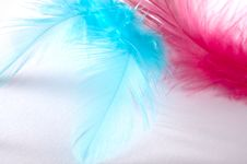 Free Feather Royalty Free Stock Photo - 19673055