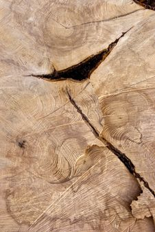 Free Cutting Texture Of Old Tree. Stock Images - 19675024