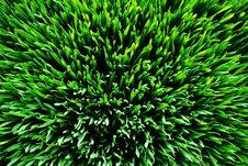 Free Grass Green 1 Stock Photo - 19675620