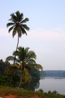 Coconut Trees With Moovattupuzha River Background Stock Photos