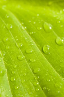Plant Leaf After Rain Stock Photo
