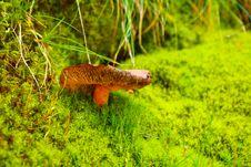 Free Orange Mushroom On Moss 01 Stock Images - 19678934