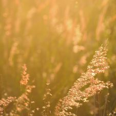 Free Sunset And Grass Stock Photo - 19678940