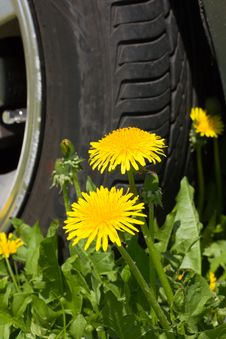 Free Flowers And A Wheel Stock Photos - 19679583