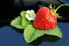 Free Fresh Strawberry  And White Flower Royalty Free Stock Photo - 19679965