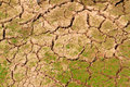 Free Ground Surface To Be Drying Together With Grass Royalty Free Stock Images - 19689349