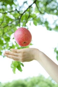 Catch An Apple Stock Images