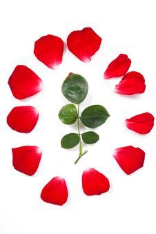 Free Rose Petals Royalty Free Stock Photo - 19681545
