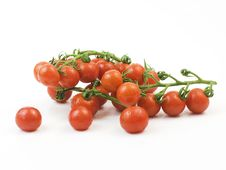 Free Organic Vegetables Stock Photography - 19681672
