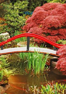 Colorful Japanese Garden Stock Photography