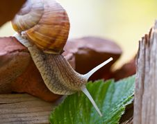 Free Garden Snail Stock Images - 19682514