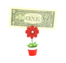 Free Money Tree,   Isolated On White. Stock Photos - 19683773