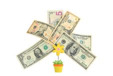 Free Money Tree,   Isolated On White. Stock Images - 19683784