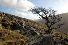 Free Dartmoor Tree England Stock Photography - 19686802