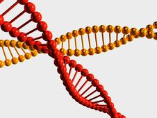 Free Yellow And Red DNA Chains On White Royalty Free Stock Photos - 19687358