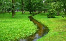 Free Meandering Stream In A Green Forest Royalty Free Stock Photography - 19688347