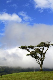 Tree On A Cloudy Hill Royalty Free Stock Photos