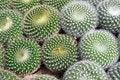 Free Cactus Royalty Free Stock Photo - 19690255