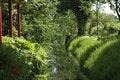 Free Rich Vegetation Royalty Free Stock Image - 19691066