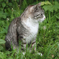 Free Grey Cat Stock Images - 19695644
