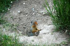 Free Squirrel Royalty Free Stock Images - 19691149