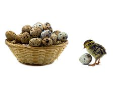 Free Baby Quails And Wood Basket Filled With Eggs Stock Photo - 19692070